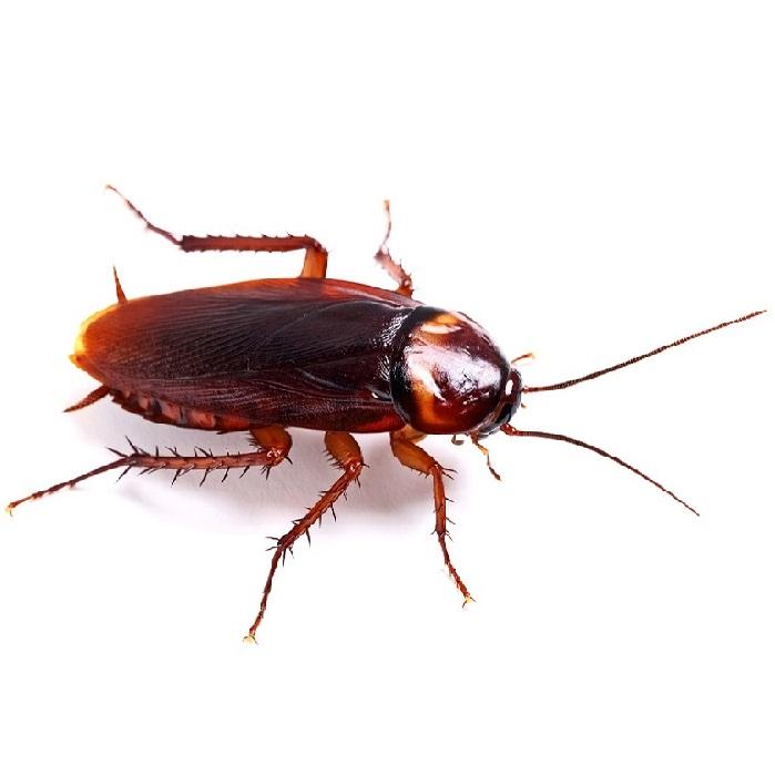 Уничтожение тараканов ПроКомфорт